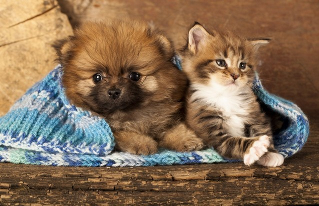 Adding a new puppy or kitten to your family is an exciting event with many fulfilling years of special companionship ahead of you. Puppies and kittens come ...